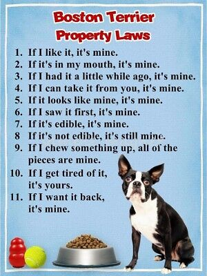 BOSTON TERRIER Property Laws Magnet PERSONALIZED With Dog's Name 2