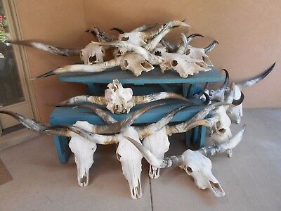 "4' to 4' 6"""" MOUNTED STEER LONGHORN SKULL HORN COW BULL LONG HORNS (ONE SET) NEW"