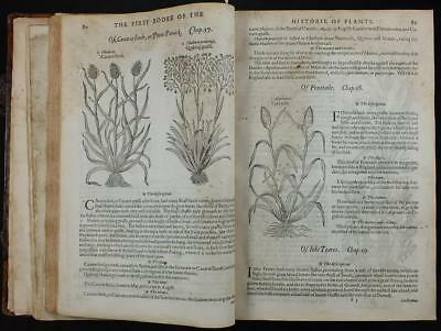 1597 Gerard's Herball, Historie Of Plants, Medicinal, Woodcuts, Folio, 1St Ed