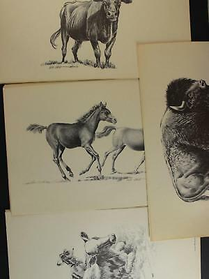 LOT: 4 1976 WESTERN ARTIST BOB DALE 11 x 17 PRINTS~CALF~HORSES~LONG HORN~BISON