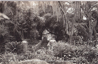 Jungle Gardens Stairs AVERY ISLAND Louisiana 1930-50 Cook Co Real Photo PC B-23