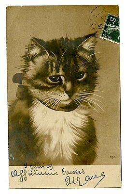 vintage cat postcard Tucks lovely large cat w bow