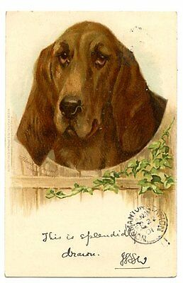 vintage dog postcard Helena Maguire Tucks Blood Hound dog 1901 CAT CHARITY