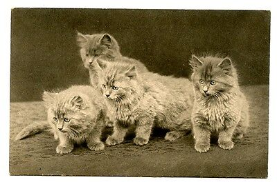 vintage cat postcard four curious cats kittens pose watching something