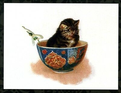 modern cat postcard Maguire tabby cat sits in china bowl w snowdrop flower