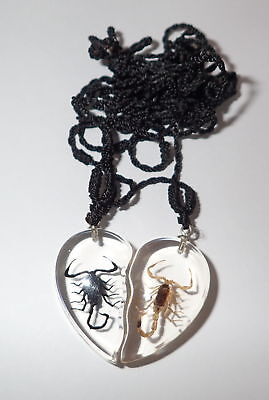 Valentine Pair Necklace Golden & Black Scorpion Specimen Heart Shape Clear