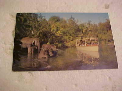 Older Disneyland The Magic Kingdom  Elephant Bathing Pool Postcard
