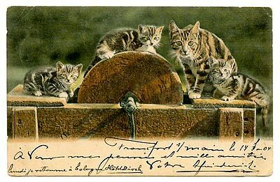 vintage cat postcard tabby cats ready to shapen claws on sharpening stone wheel