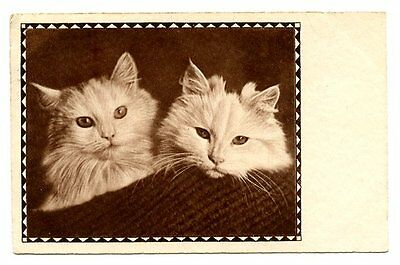 vintage cat postcard gorgeous pair cats peep over blanket 1933