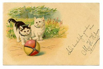 vintage cat postcard curious cats in garden play w ball