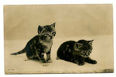 vintage cat postcard real photo gorgeous pair of cats kittens