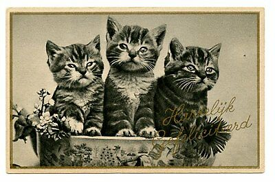 vintage cat postcard adorable cats kittens in bowl w flowers