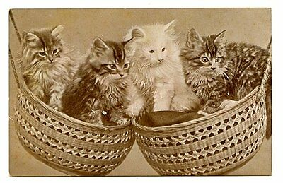 vintage cat postcard sweet cats kittens balance in hanging baskets