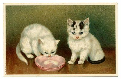 vintage cat postcard adorable cats pair drink saucer of milk
