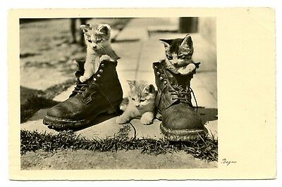 vintage cat postcard real photo trio kittens cats in pair of boots  CAT CHARITY