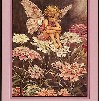 """""""blackberry"""" Flower Fairy Sits Among Prickly Brambles,cmb,barker,repro Postcard"""