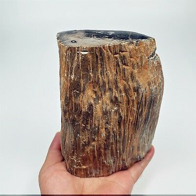 146mm 1497g Polished PETRIFIED WOOD BRANCH Fossil Madagascar A1648