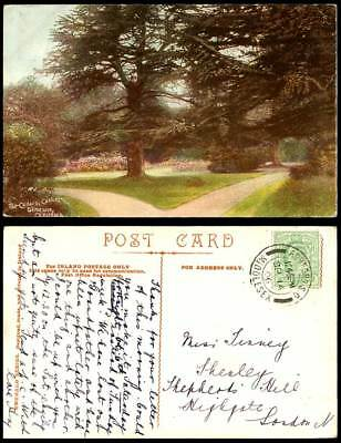 Ireland Co Kildare 1906 Old Postcard The Cedars Caxton Demesne Cedar Trees Irish