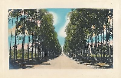 1937 PlRoyal Palm lined road Honolulu  Hawaii HAND COLORED  Photo