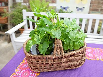 VINTAGE TRADITIONAL old  SHOPPING BASKET - SMALL - GREAT FOR DISPLAY