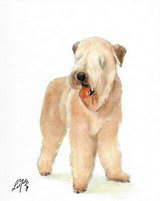 Original Oil Art SOFT COATED WHEATER TERRIER Portrait Painting DOG PUPPY Signed