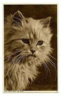 vintage cat postcard real photo longhaired grumpy cat Late again with the milk