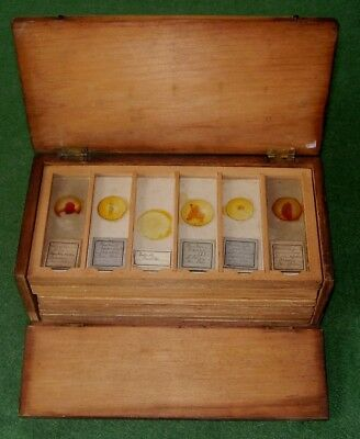 ANTIQUE MICROSCOPE SLIDES PREPARED IN BOX 55 TOTAL SLIDES EDWARDIAN circa 1900