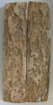 FOSSIL BARK KNIFE SCALES  4-11/16 X 1-1/16 to 1-1/8 X 1/4