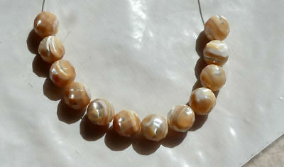 12 Gorgeous 10mm Natural Faceted Iridescent GOLDEN SEA SHELL Round Beads