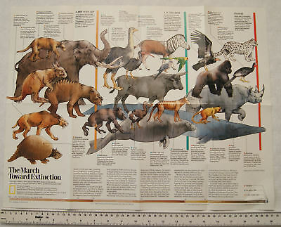 1999 National Geographic poster - new view of dinosaurs, March toward extinction