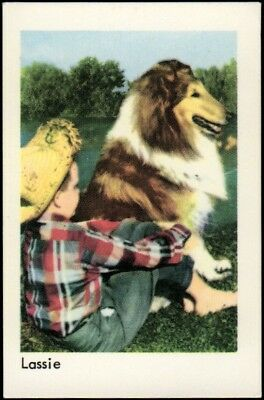 1967 Vintage Swedish Unnumbered Disney Set Gum Card Lassie