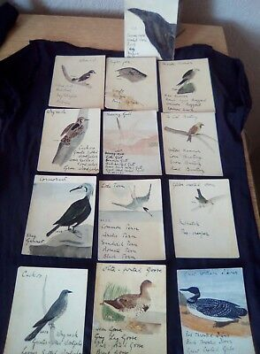 13 x MINIATURE PAINTINGS ON CARD the study of worldwide BIRDS early 20th (1of2).
