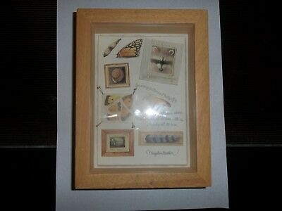 MARJOLEIN BASTIN SKETCHBOOK-3-D SHADOW BOX W/WALL HANGER-Butterfly Raccoon Snail