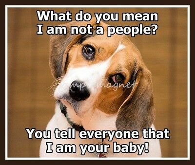 "BEAGLE People 3.25"" x 2.75""  Fridge Magnet"