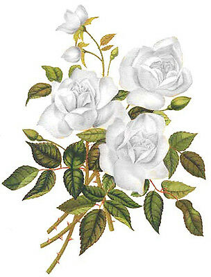 WHiTe GarDeN TeA RoSeS ShaBby WaTerSLiDe DeCALs
