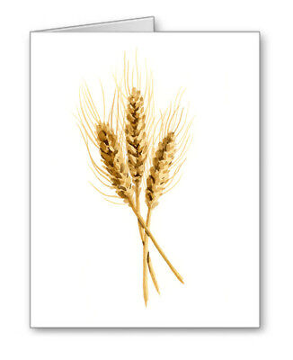 Wheat Note Cards With Envelopes