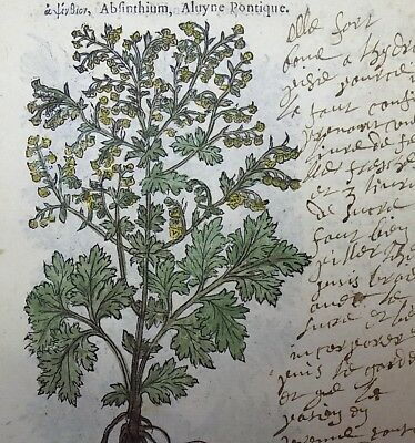 1549 Leonhard FUCHS 2 Woodcuts WORMWOOD with early French MANUSCRIPT