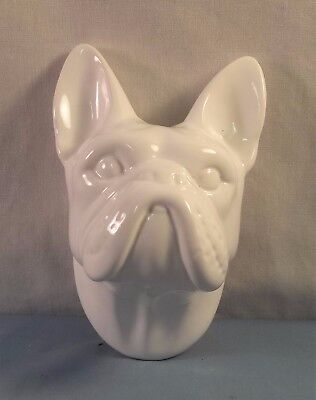 Undecorated French Bulldog Head Study