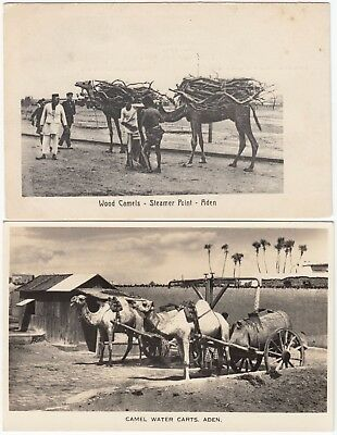 MIDDLE EAST 2x ADEN post cards *WOOD CAMELS* & *CAMEL WATER CARTS* not used