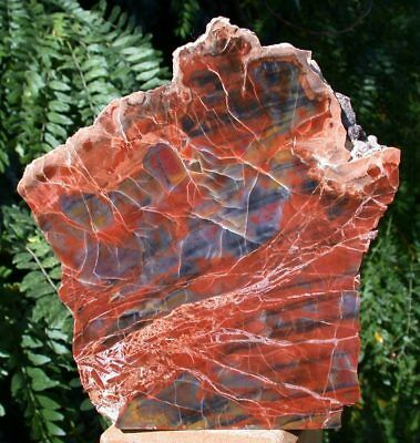 SiS: ARIZONA RAINBOW Petrified Wood Display Piece - Free Standing Sculpture!