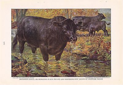 1925 Aberdeen-Angus - Cattle of the World Edward Herbert Miner Vintage Cow Print