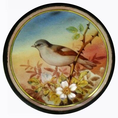 The Most Beautiful Rare Victorian Painted Bird In Blossom Stained Glass Roundel