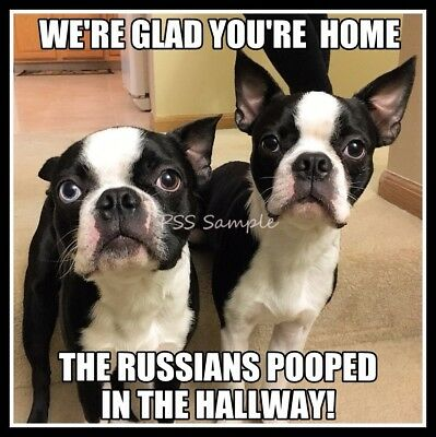"BOSTON TERRIER 4"" x 3"" FUNNY The Russians Pooped in the Hallway Magnet"