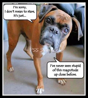 """BOXER 3.50"""" x 3.25"""" FUNNY Magnet"""
