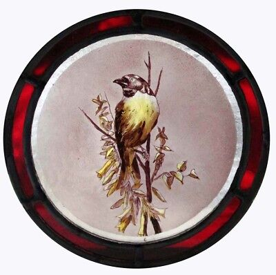 Stunning Rare English Painted Finch Victorian Bird Stained Glass Roundel