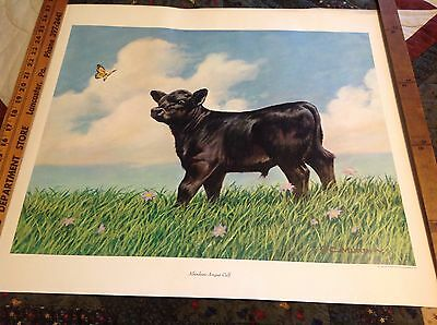 1962 American Angus Association Print,very good used cond.