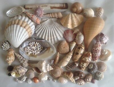 Mixed Collection of 50+ Sea Shells Wedding Table Decoration Fish Tank Bathroom
