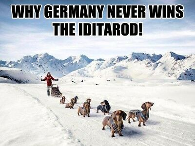 DACHSHUND Germany Iditarod Funny 4x3 Fridge Magnet