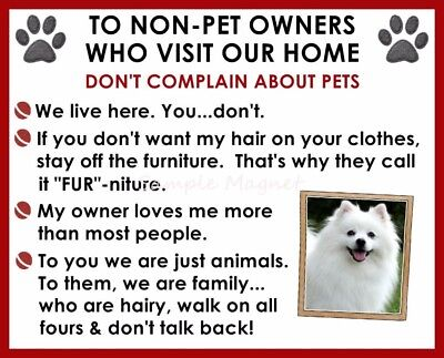 AMERICAN ESKIMO DOG House Rules for Non Pet Owners Funny Fridge Magnet