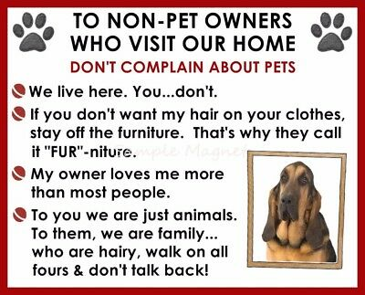 BLOODHOUND House Rules for Non Pet Owners Funny Fridge Magnet